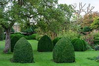 Topiaire Buxus, mitres Bishop's - Yews Farm, Martock